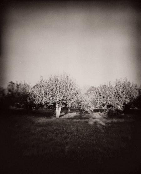 Sean Alonzo Harris, Fruitful, at Susan Maasch Fine  Art through October.
