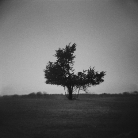 Untitled (Three Quarter Tree), 2011©Tonee Harbert. All Rights Reserved